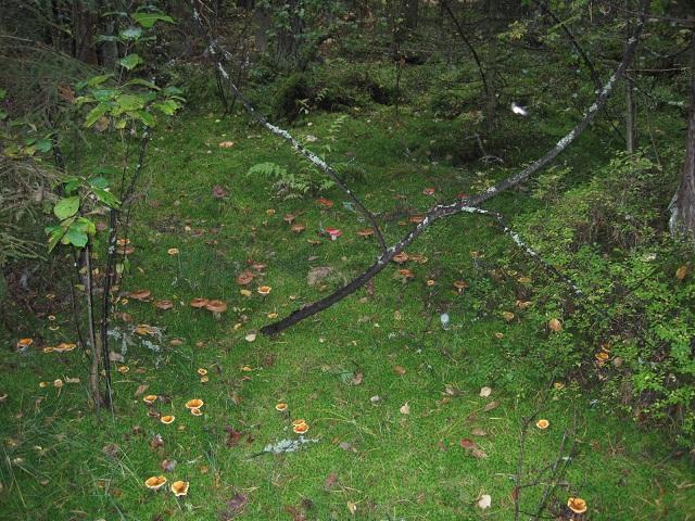 За грибами в Конаково (Тверская область, Волга)! Fcd1de72e580