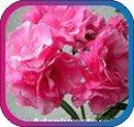 продам семена экзотических растений - Страница 3 71ef6ec65725