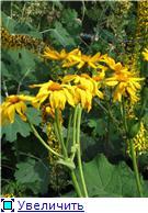 Растения для тени или Тенистый сад. 11938cdb1d79t