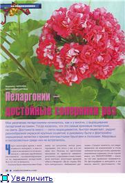 Пеларгонии - Страница 23 0a9c07f2cab2t