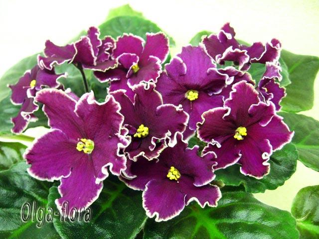 Цветение к Н. Г. (Olga-flora) - Страница 6 Bbf469911f25
