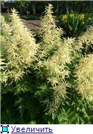 Лето в наших садах - Страница 2 405539f258f0t