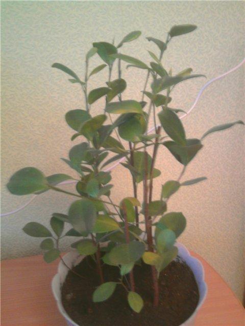 Уцененные растения из цветочных магазинов B0919aa39757