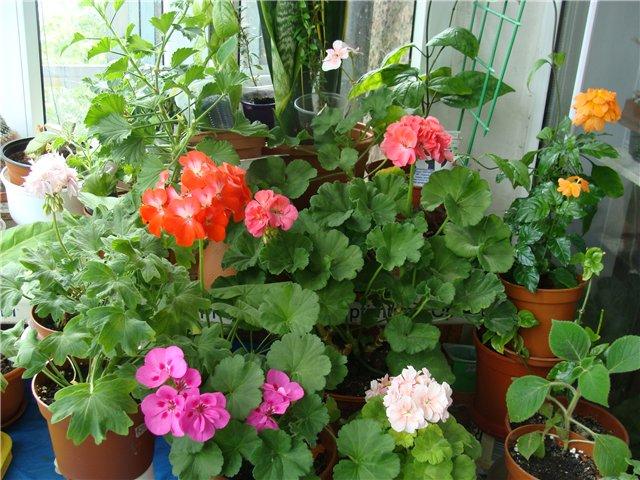 Весеннее  цветение (Хваст от Веры) - Страница 8 23bfb4c43914