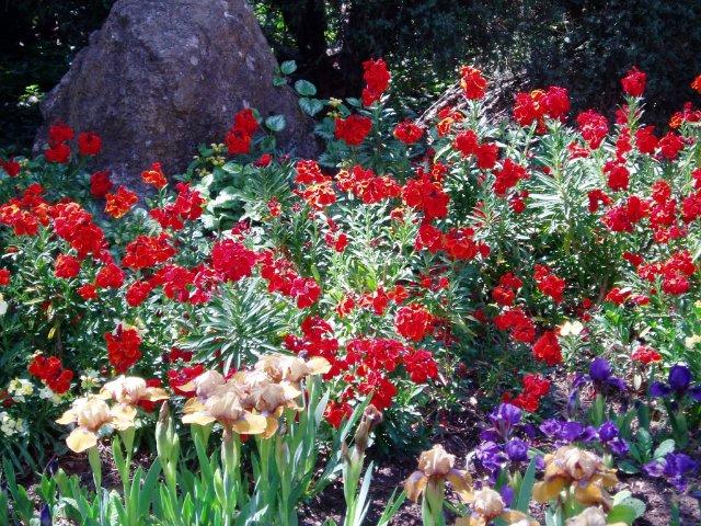 Крым. Никитский ботанический сад. 9539325d9511