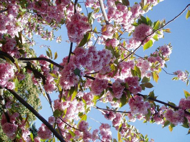 Крым. Никитский ботанический сад. 89d8f49a47ec