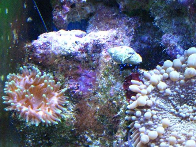 Фотографии аквариума Fbbc0783f256