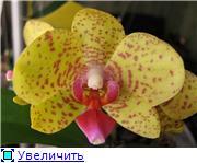 Реанимация орхидей. 55c13690e8eat