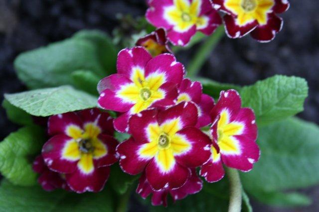 Растения от FILIGERa - Страница 2 4bf59d90155e