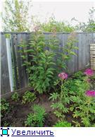 Лето в наших садах - Страница 7 34f6c174403at