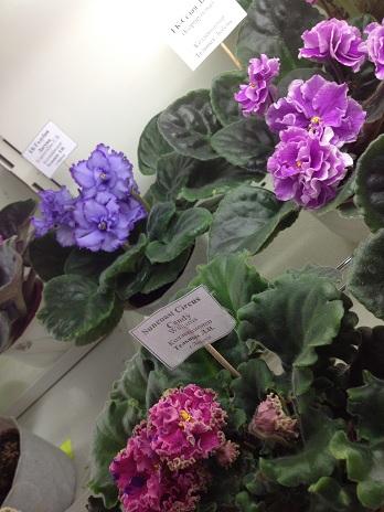 Выставка цветов - Страница 2 Cc0219316c14