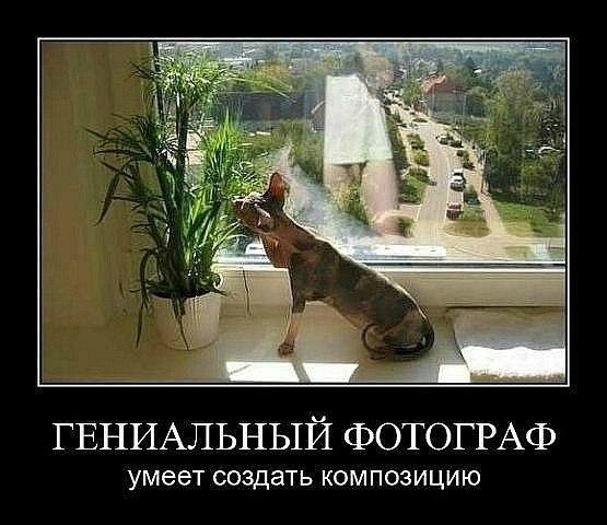 """Фотоконкурс """"Лето в объективе"""" Dbae601fcea7"""