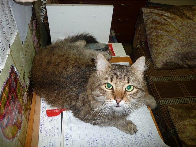 Кот Васька ищет хозяина 6c618fa5f915