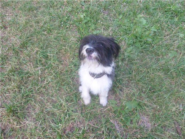 Моя первая собака. 97ddcee6c740