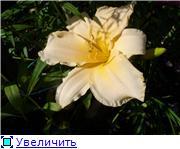 Лето в наших садах - Страница 7 Ed59ef0918d6t