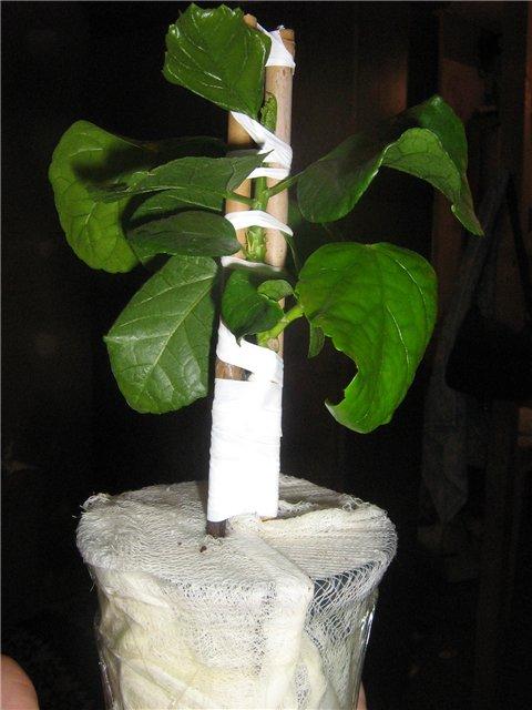 Растения из Сочинского питомника D8f222f9a832
