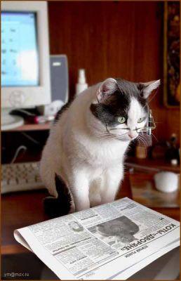 Фотографии кошек 228adfe50483