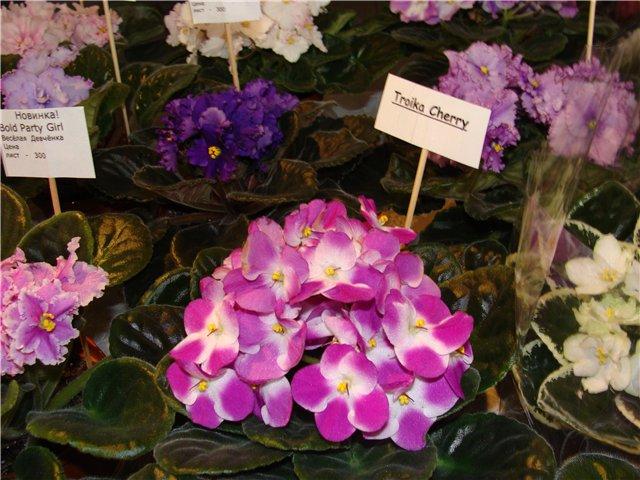 Международая выставка «Цветы.Ландшафт .Усадьба 2010» Астана - Страница 3 Ec02a978184f