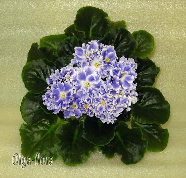 Цветение к Н. Г. (Olga-flora) - Страница 6 C2fbe43815c2