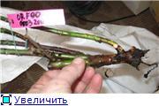 Specially for Karkela )))    Тестирование сербок и проч. - Страница 3 D0e72c9d31f4t