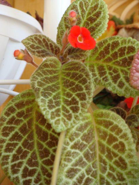 Мои цветочки - Страница 13 1e2524462dd1