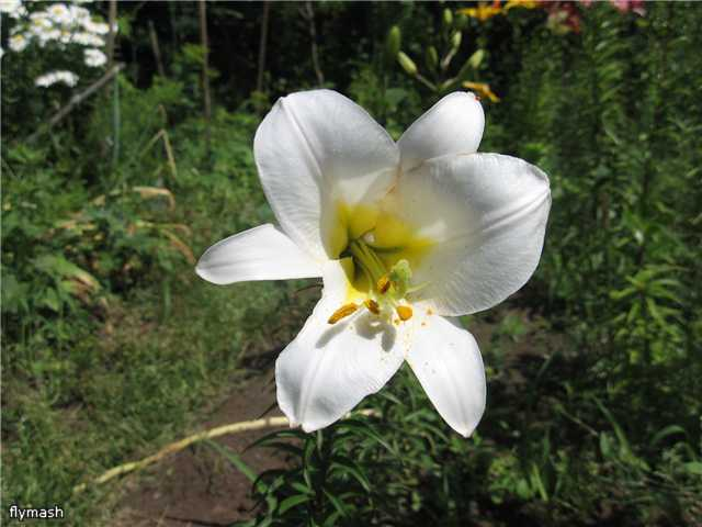 Во саду ли, в огороде... 28d8528e3d30