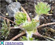 Весна идёт... 060c8755aaaft