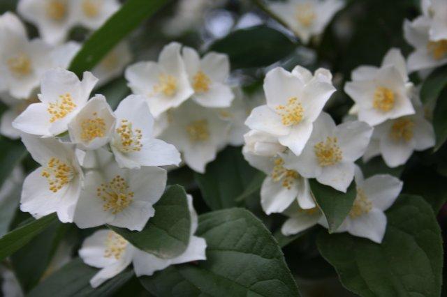 Растения от FILIGERa - Страница 2 D6ad202322b6