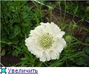 Лето в наших садах - Страница 6 Ea4675839868t