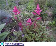 Лето в наших садах - Страница 6 44c1acd1f027t