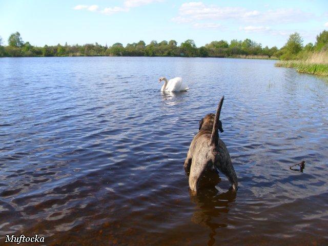 Собаки Татьяны Моисеенковой, кот Мензурка - Страница 4 4dd3108f9397