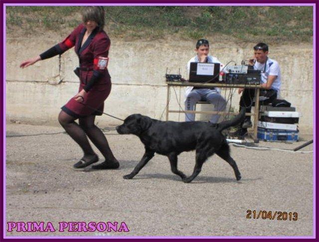 """Питомник """"Прима Персона"""". Мои собаки-моя жизнь! - Страница 2 7baf9a8bb43b"""