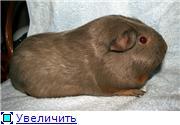 Морские свинки - Страница 3 Add85c8b76bet