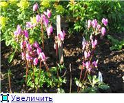Весенне цветущие 1a1adfd16af1t