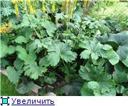 Растения для тени или Тенистый сад. F009f8f59c8dt