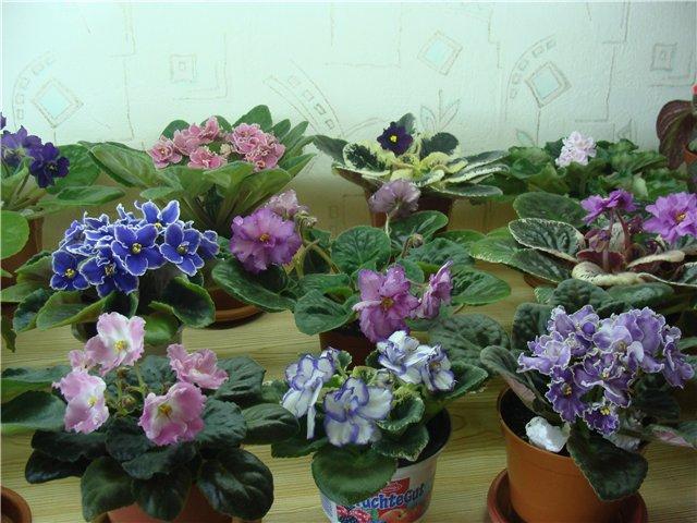 Весеннее  цветение (Хваст от Веры) 34edecdd427d