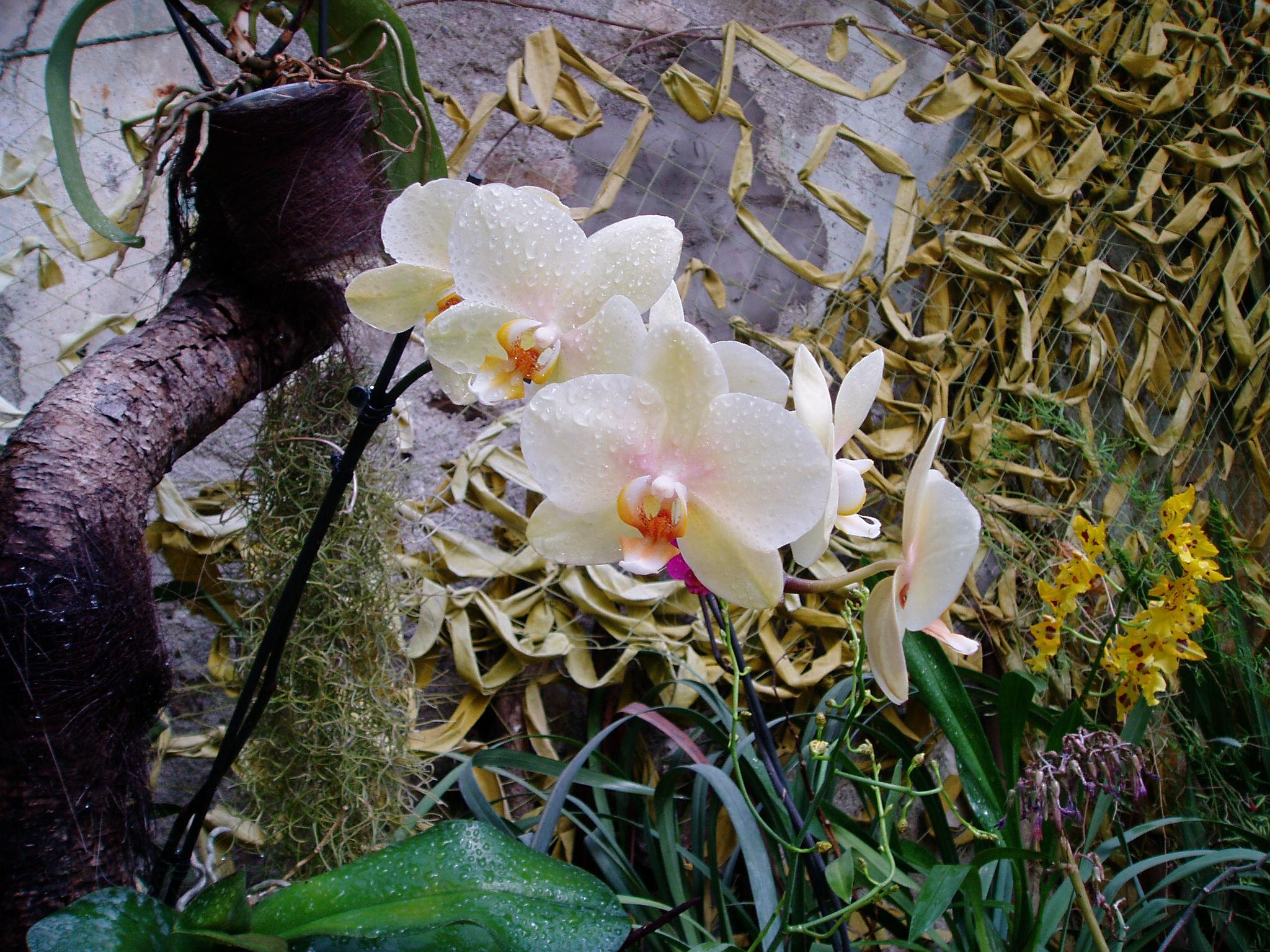 Выставка Орхидей Bd549bb573f9