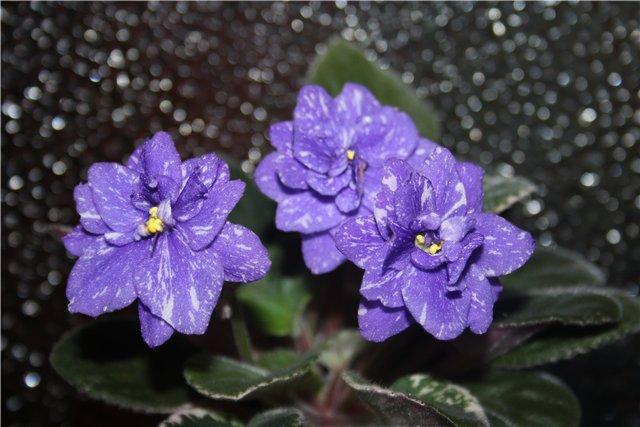 Растения от FILIGERa - Страница 13 846fe158d264