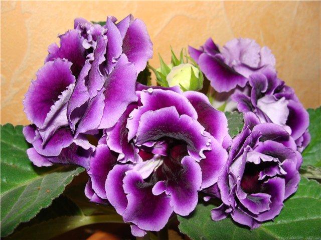 Весеннее  цветение (Хваст от Веры) - Страница 2 D4a6b3ff6318
