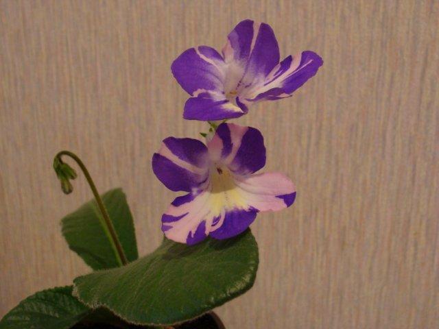 Мои цветочки - Страница 2 1c91c1dfdce2
