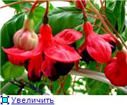 ФУКСИИ В ХАБАРОВСКЕ  - Страница 11 3d9919a11e31t