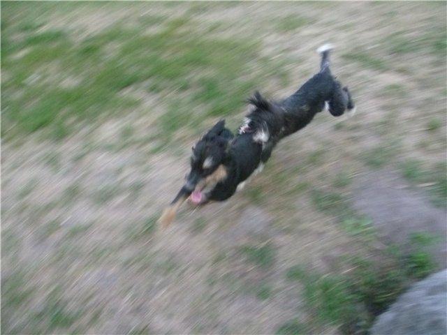 Моя первая собака. 238991b068cd