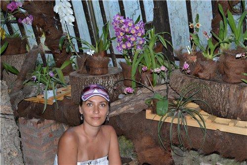 Выставка орхидей Никитского ботанического сада 462cf8173e6b