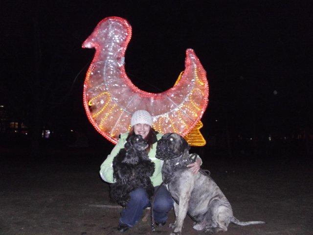 Собаки Татьяны Моисеенковой, кот Мензурка - Страница 3 F61fc050b78a