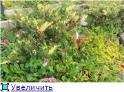 Cад Людмилы Ивановой из черкасс 74b35accb18et