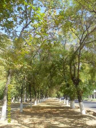 Фото конкурс: Осень в моем городе  A3838af7aaaf