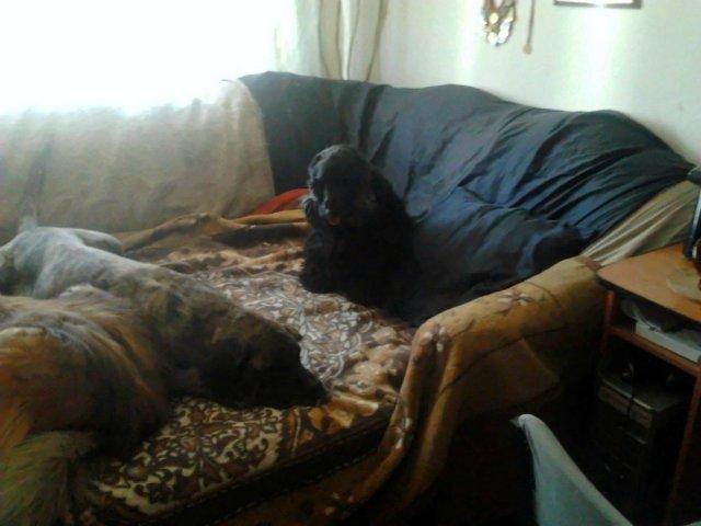 Наши собаки, друзья и гости, кот Мензурка - Страница 30 4cf7063ee84d