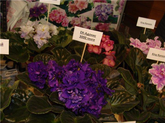 Международая выставка «Цветы.Ландшафт .Усадьба 2010» Астана - Страница 3 E485edf12097