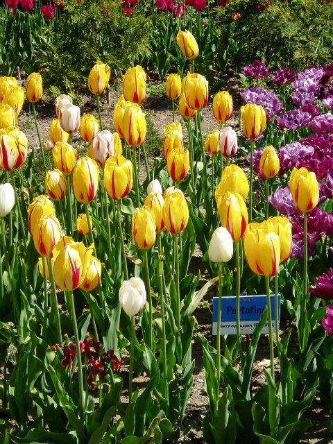 Крым. Никитский ботанический сад. B3fddf928f02