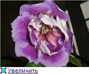 """""""Цветочки на окне - очей очарованье..."""" - Страница 2 11e83644951bt"""